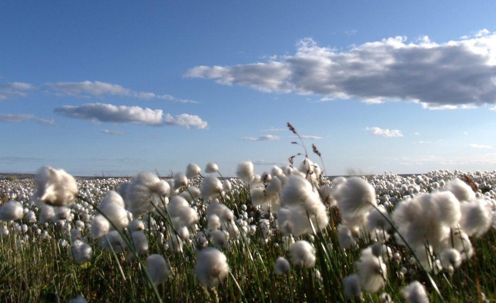 Turkey Cotton Production
