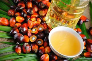 indonesian palm oil companies