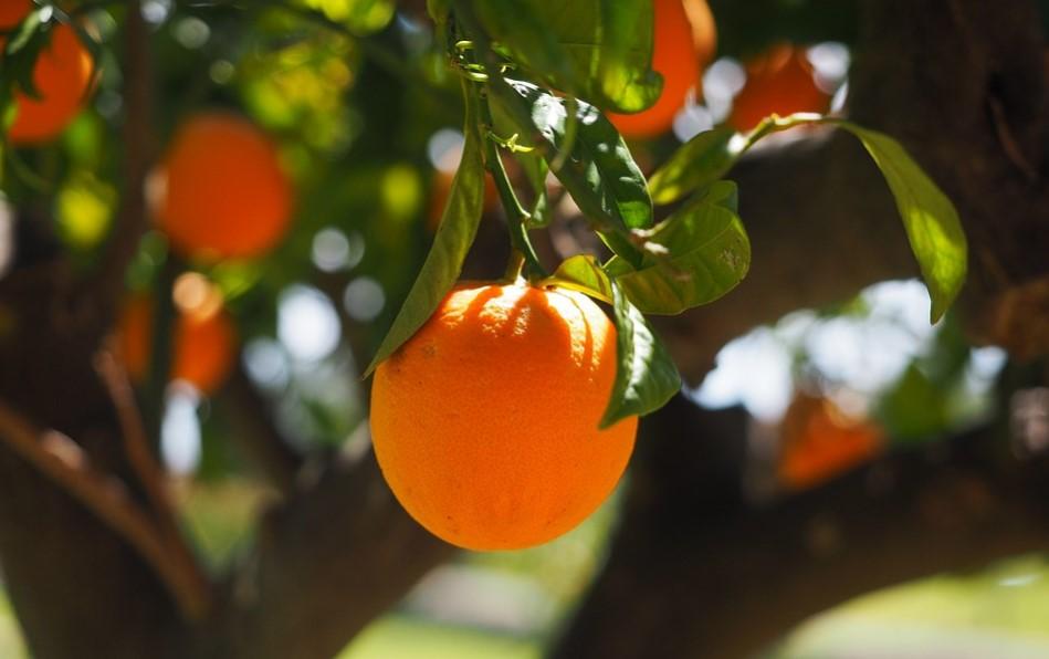 global fruit industry