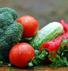 vegetable farming industry
