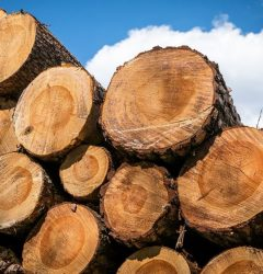 largest wood producing countries