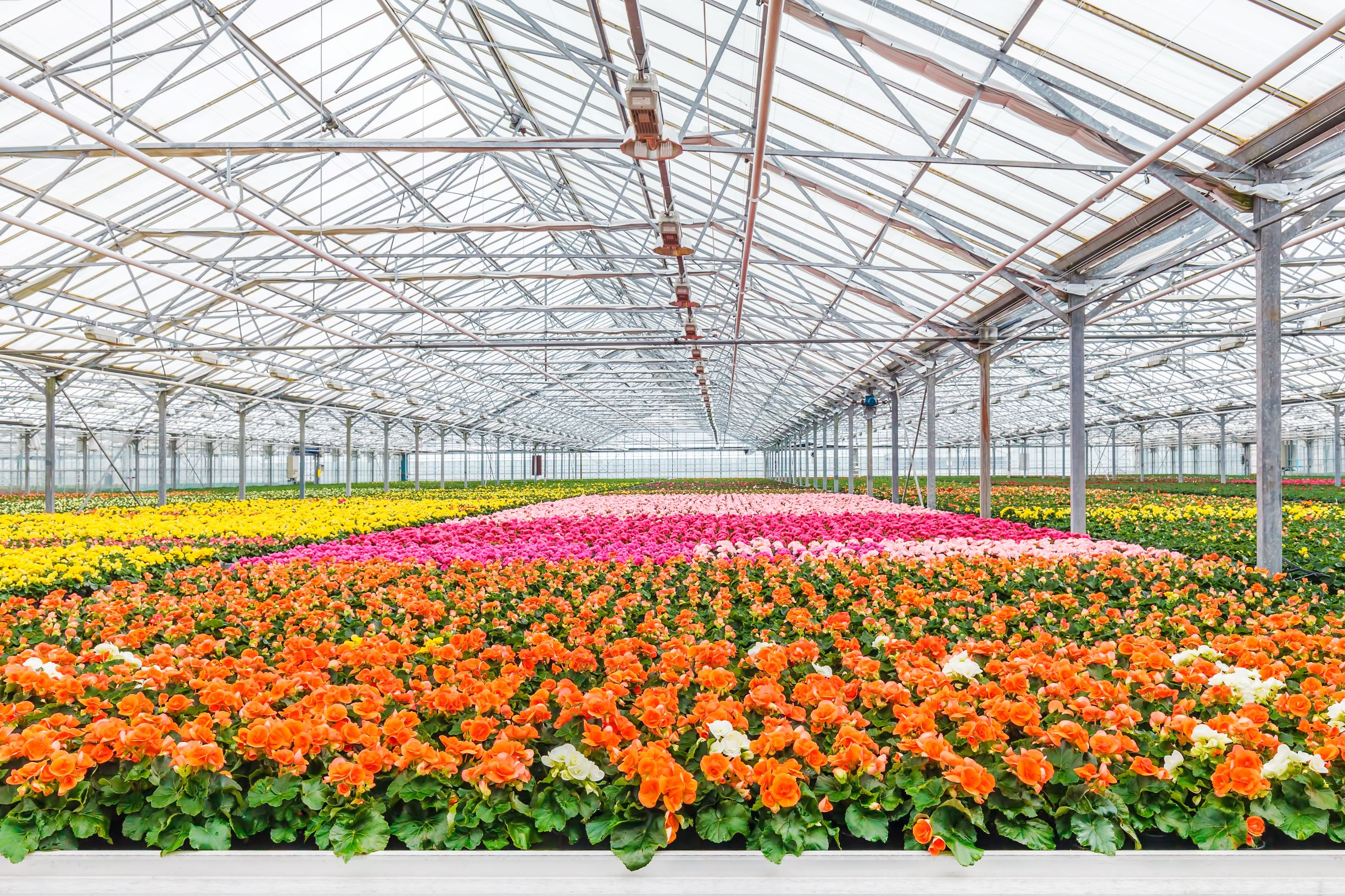 Floral industry companies